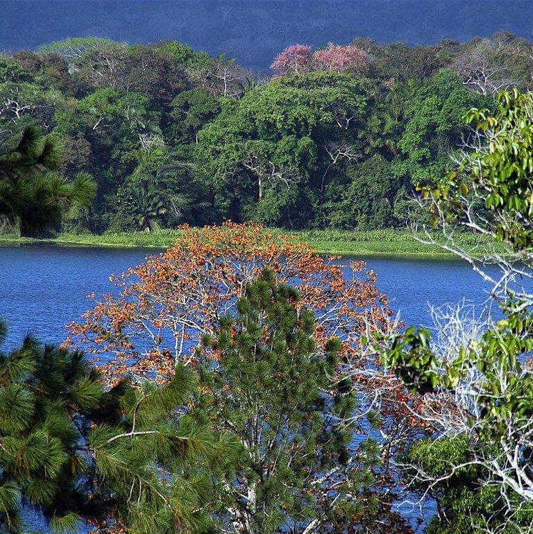 Gamboa Rainforest